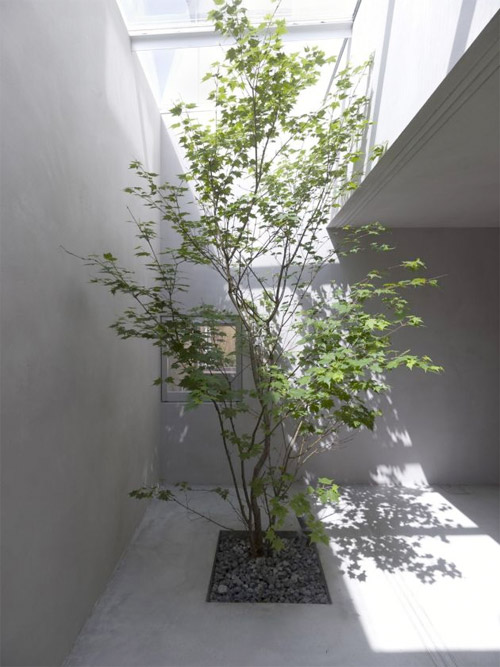 patio en béton avec un arbre